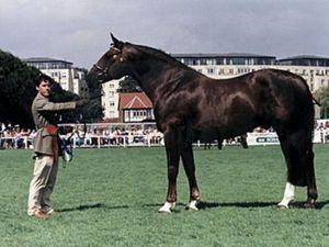 Horse_Crosstown_Dancer-_2